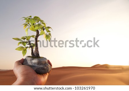 Hand Holding Plant on a Sunset Background. Environment and Global Warming concept.
