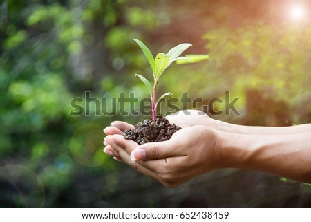 hand holding plant with bokeh and nature background, save the world and World Environment Day concept at sunny day. subject is blurred #652438459