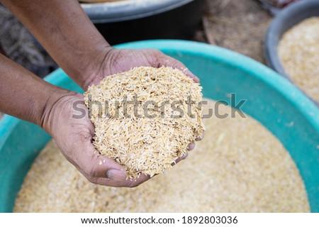 Hand holding raw yellow rice husk. Harvesting husk organic ingredient. Stock photo ©