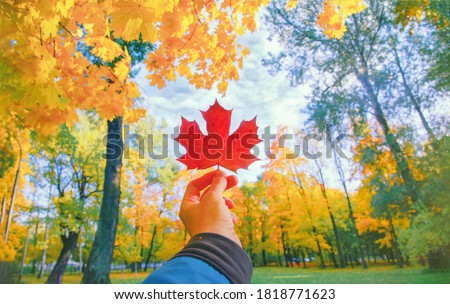Photo of  Hand holding red autumn leaf closeup. Maple fall leaves in park. Hello october concept. Nature change mood. Yellow sunny forest on orange color background. Pov view up blue sky. Happy gold tree season