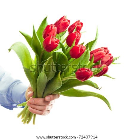 Hand holding red tulips
