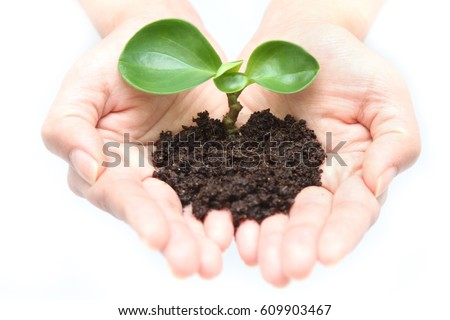 Hand holding seedlings with both hands (Earth environment) - Shutterstock ID 609903467