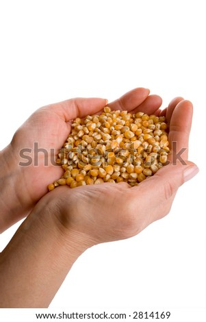 """Hand holding seeds.Concept """"Feed the world"""""""