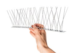 Hand holding single strip of bird spikes. The stainless bird spikes or pins prevent pigeons, sparrows, seagulls, swallows etc. from landing, roosting or nesting.  Concept for humane pest control.