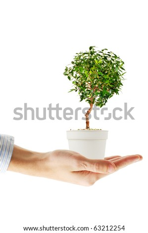 Hand holding small decorative tree isolated on white