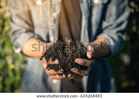 Hand holding soil,Hand dirty with soil.  Hands holding soil in agricultural field.