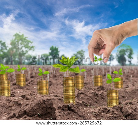 Hand holding the seed on stack of gold coins with seed on the start cultivation Cassava or manioc plant field, business investment concept