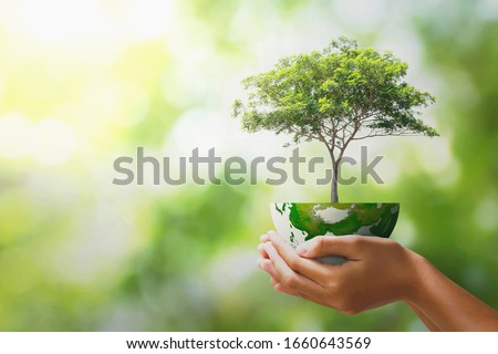 hand holding tree with half globe an d sunlight. concept eco earth day