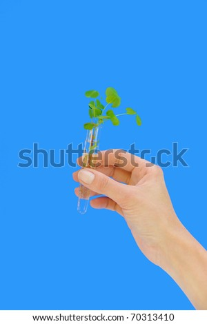Hand holding tube with fresh  sorrel (oxalis) - environment concept