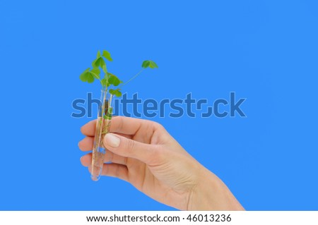 Hand holding tube with fresh  sorrel (oxalis) - environmental concept