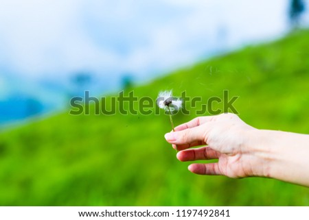 Hand holding white fluffy Dandelion flower blowing away with wind, float in fresh air in meadow field near mountain. Seed dispersal parachutes. Beautiful tranquil nature represent peaceful moment #1197492841