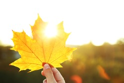 Hand holding yellow maple leaf on  autumn yellow sunny background