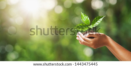 hand holding young plant on blur green nature background. concept eco earth day