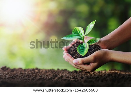 hand holding young plant on soil and green nature background. eco concept