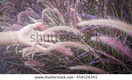 Hand is a touch of grass Tune warm colors .Means Feeling freedom #458528341