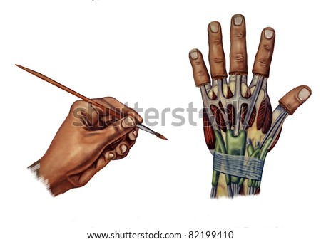 hand medical illustration about the carpal tunnel syndrome