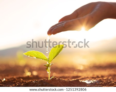 Photo of  Hand nurturing and watering young baby plants growing in germination sequence on fertile soil at sunset background