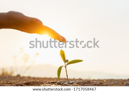 Hand nurturing and watering young baby plants growing in germination sequence on fertile soil at sunset background ストックフォト ©