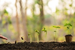 hand nurturing and watering young baby plants growing in germination sequence on fertile soil with morning light green nature bokeh background. agriculture, growing plants, plant seedling, gardening.