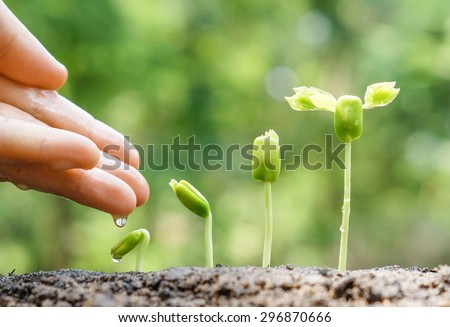 hand nurturing and watering young baby plants growing in germination sequence on fertile soil with natural green background - Shutterstock ID 296870666