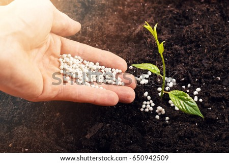 hand of a farmer giving fertilizer to new green plant in soil Photo stock ©
