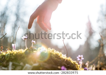 Hand of a man above a blue flower back lit by the sun in a garden, suitable for business,  life and spirituality concepts.