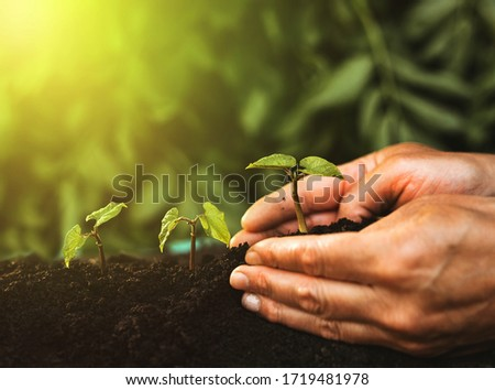 Hand of a person planting green seedlings. Plant protect nature and earth day concept. ストックフォト ©