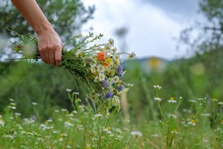 Hand of a young caucasian white woman holds a wild flower bouquet on beautiful floral and blue sky background with copy space. Flowers, grass meadow. Gathering wildflowers. Walking happy girl.