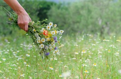Hand of a young caucasian white woman holds a wild flower bouquet. Summer or Spring day. Beautiful floral background with copy space. Flowers, grass meadow. Gathering wildflowers. Walking happy girl.
