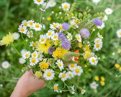 Hand of a young caucasian white woman or girl holds a wild flower bouquet. Spring day. Beautiful floral background with copy space. Flowers, grass meadow. Gathering wildflowers. Walking happy girl.