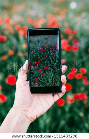 hand of a young woman taking a picture of a field with poppy flowers. Spring concept