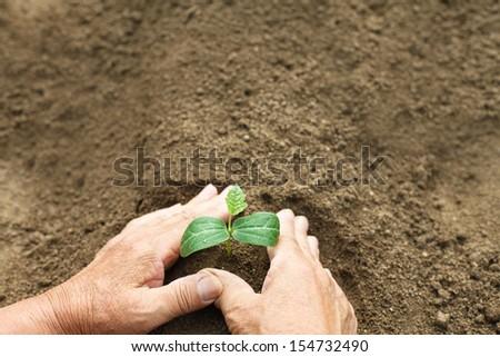 Hand of farmer planting seedlings - stock photo