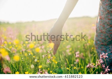 hand of girl touching wildflower at meadow walking at sunset, wildflowers in woman hand in meadow close up