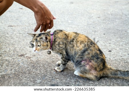Hand of person stroking head of cute cat and patting a happy cat
