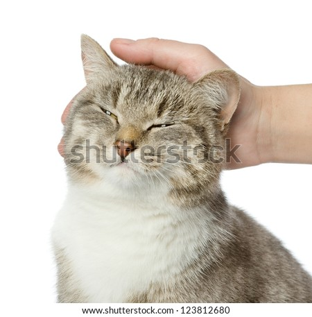 Hand of person stroking head of cute cat. isolated on white background