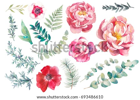 Hand painted floral elements set. Watercolor  illustration of anemone, peony, rose flowers and eucalyptus leaves. Natural objects isolated on white background