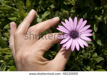 Hand picking a flower