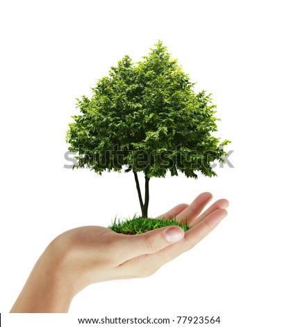 hand plant ,tree - stock photo