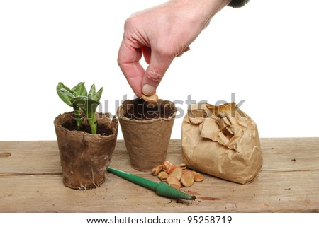 Hand planting a bean seed into soil in a fiber plant pot