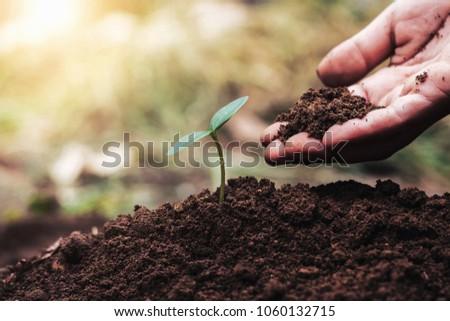 hand planting green seedling...