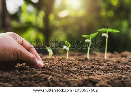hand planting seeding growing step in garden with sunshine - Shutterstock ID 1030637602