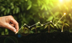 Hand planting seedling growing step in garden with sunny background. Concept of business growth, profit, development and success.