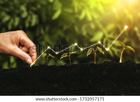 Hand planting seedling growing step in garden with sunshine. Concept of business growth, profit, development and success.