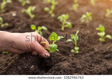 Hand planting small plant in the garden in spring. Ecology concept #1082986763