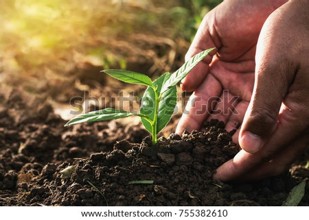 hand planting sprout in soil...