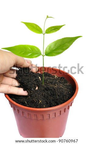 Hand planting young plant in pot - stock photo