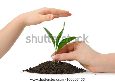 Hand putting a plant in heap earth and a children's hand covering. Isolated on white background