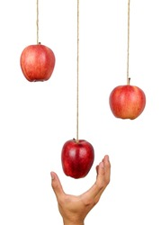 Hand reach to grab the hanging apple isolated on white background. Low hanging fruit concept. Clipping path.