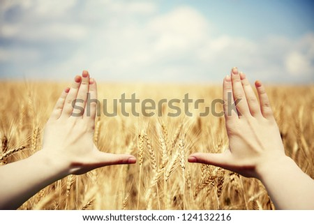 Hand's frame over the wheat field