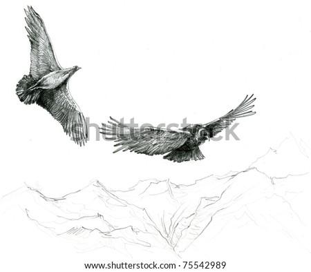 Hand Sketch of Andean Condors